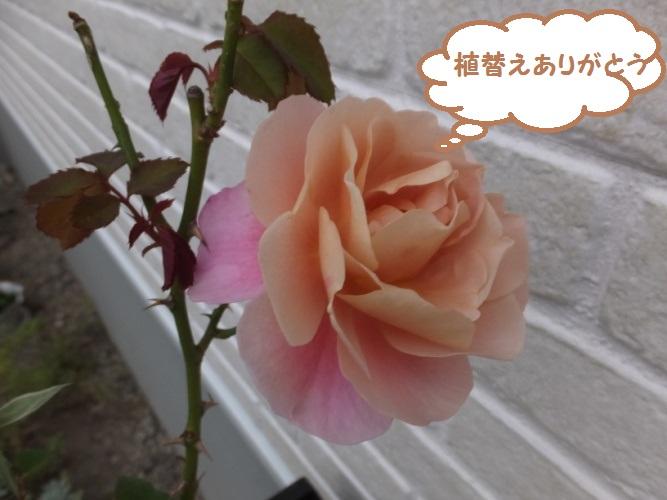 DSCF6190_1.jpg