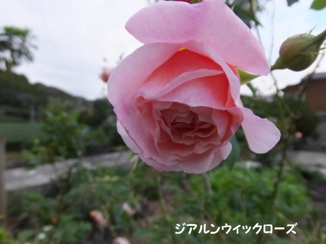 DSCF6233_1.jpg
