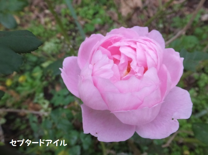 DSCF6234_1.jpg