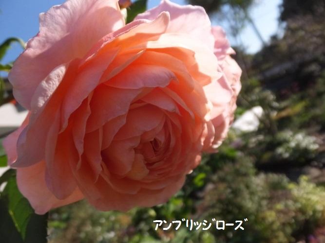 DSCF6242_1.jpg