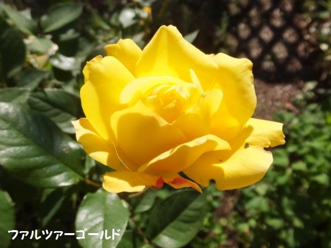 DSCF6243_1.jpg