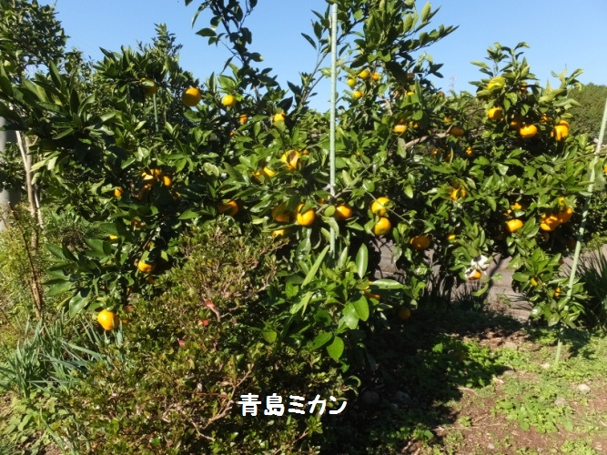 DSCF6247_1.jpg