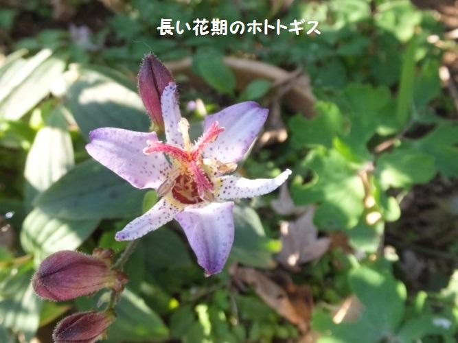 DSCF6294_1.jpg