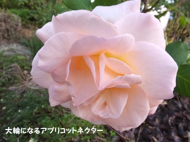 DSCF6335_1.jpg