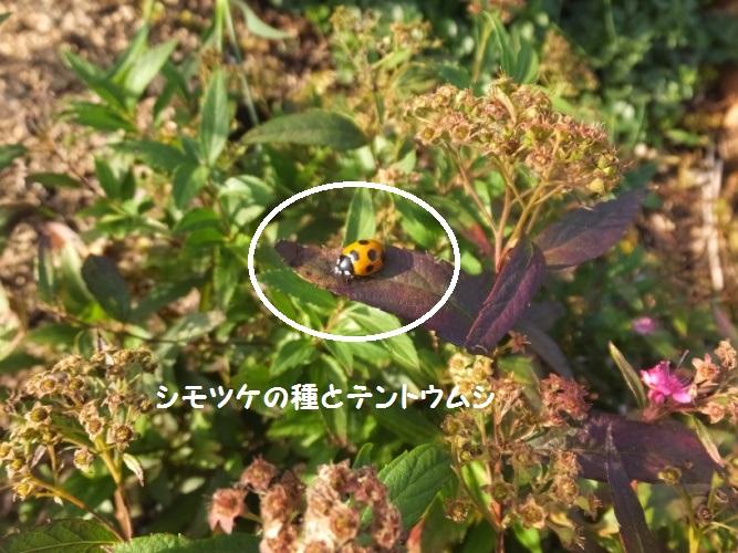 DSCF6338_1.jpg