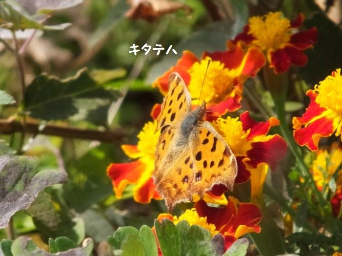DSCF6348_1_20181119161930e04.jpg