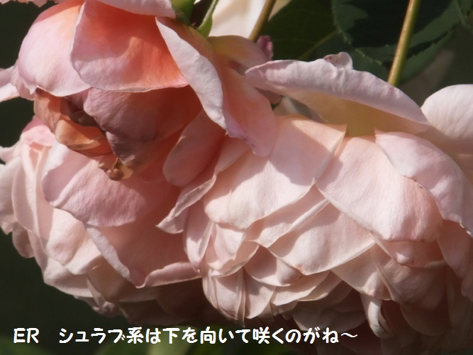 DSCF6351_1.jpg