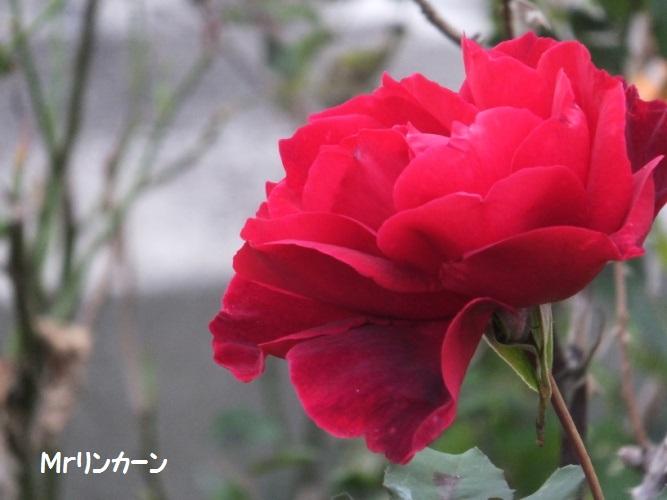 DSCF6369_1.jpg