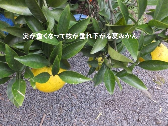 DSCF6374_1.jpg