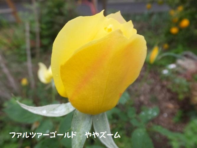 DSCF6404_1.jpg