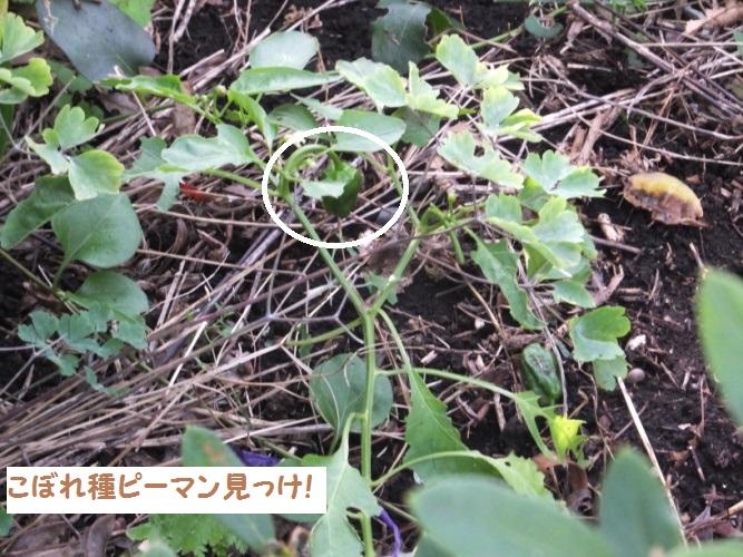 DSCF6513_1.jpg