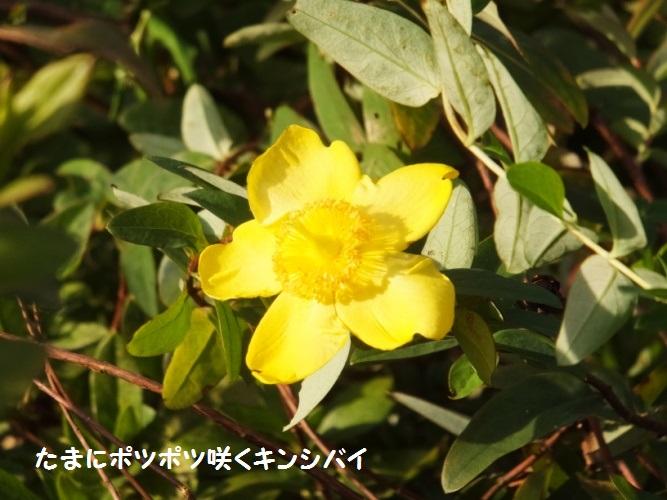DSCF6539_1.jpg