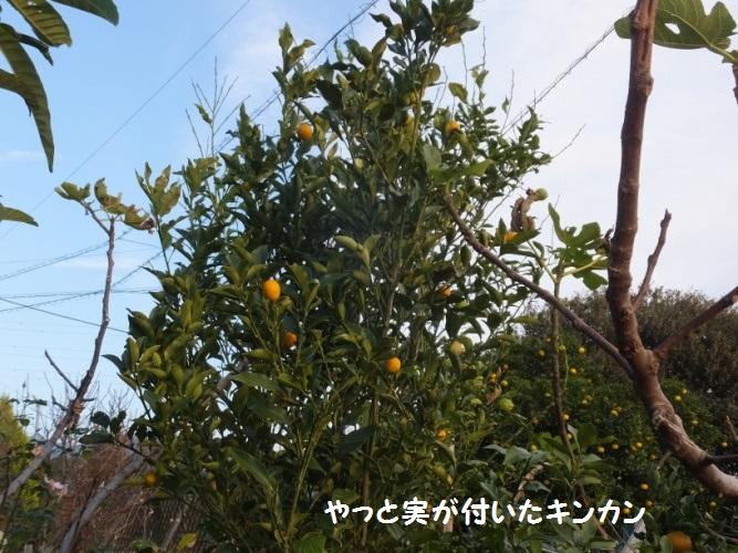 DSCF6615_1.jpg