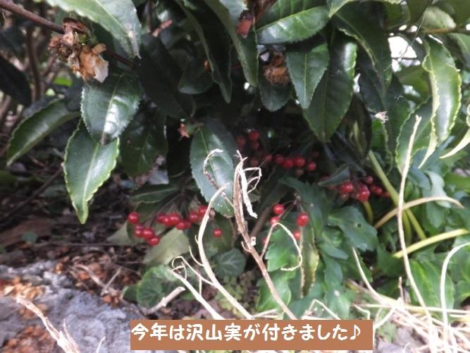 DSCF6733_1.jpg