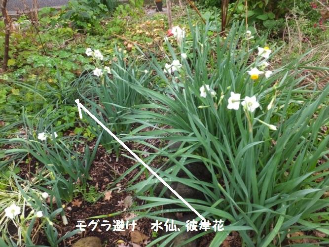 DSCF6738_1.jpg