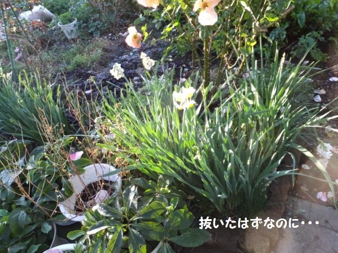 DSCF7019_1.jpg