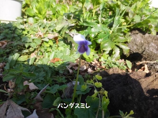 DSCF7115_1.jpg
