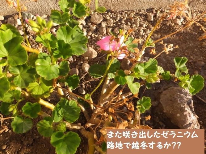 DSCF7136_1.jpg