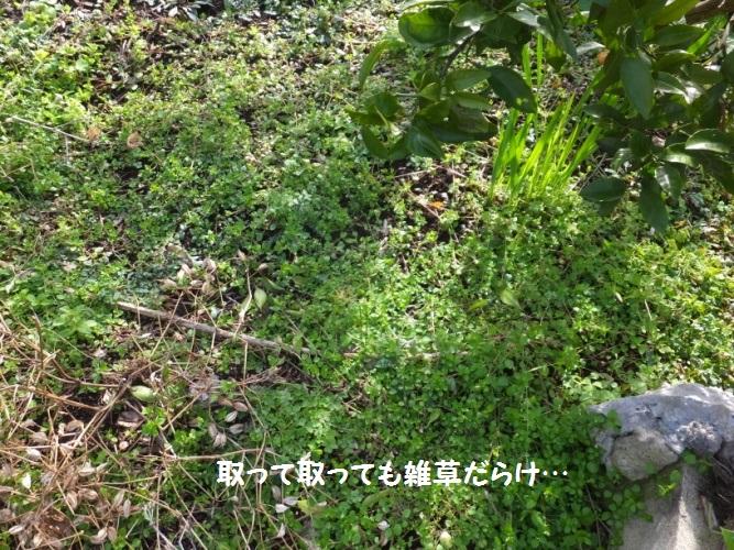 DSCF7172_1.jpg