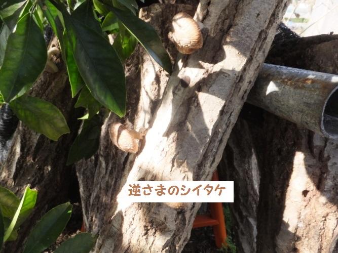 DSCF7177_1.jpg