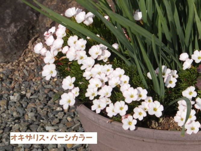 DSCF7181_1.jpg