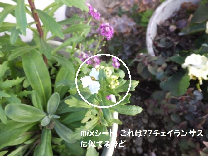 DSCF7468_1_2018123009063451d.jpg