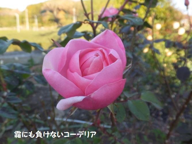 DSCF7578_1.jpg