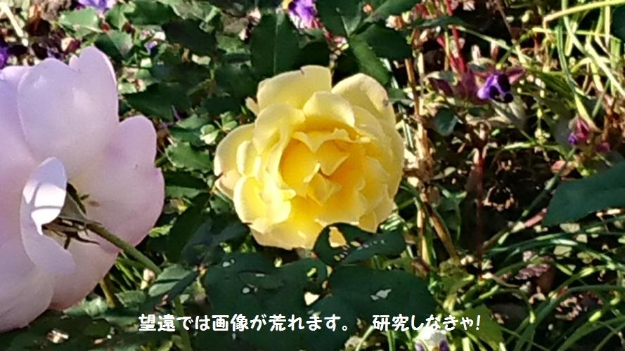 DSC_0015_1.jpg