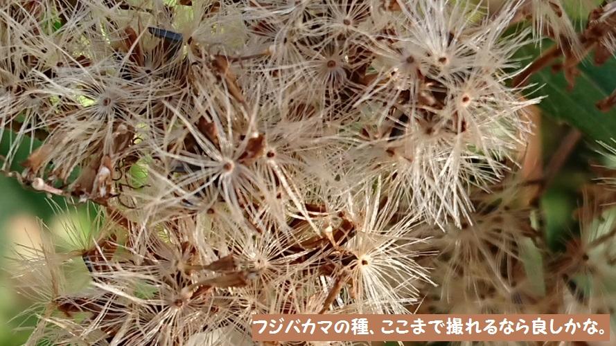 DSC_0030_1.jpg