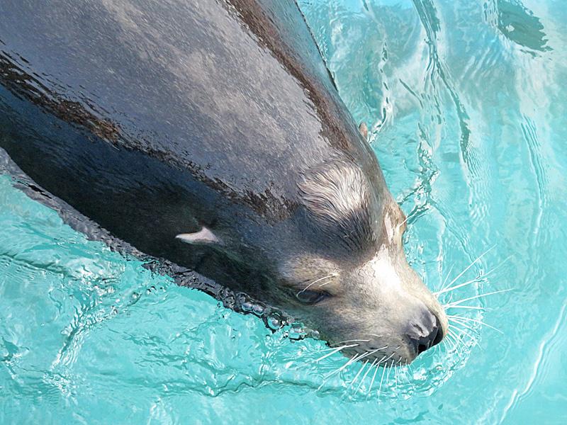 170611,油壺マリンパーク海獣たち07