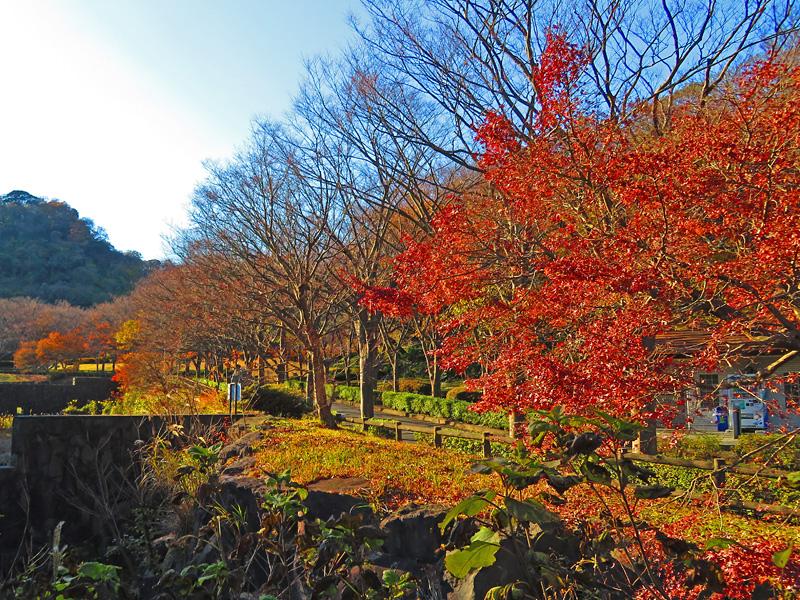 171210横須賀市営公園墓地紅葉5