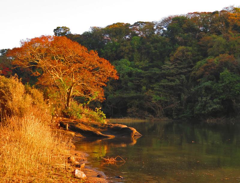 1105,小網代の森晩秋12