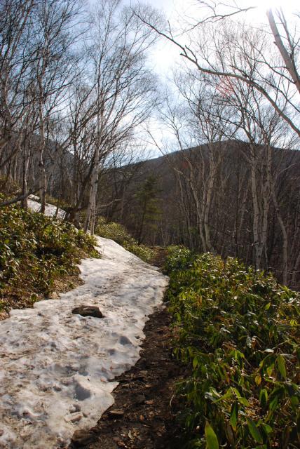 四阿山_残雪と笹薮の登山道