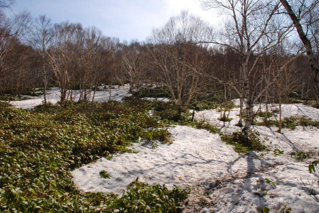 四阿山_残雪で登山道を見失った