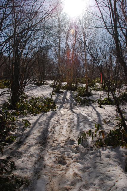 四阿山_残雪の笹薮を踏み吹き覚悟で強行突破