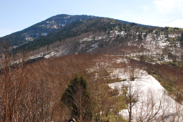 登山道の先に四阿山の山頂