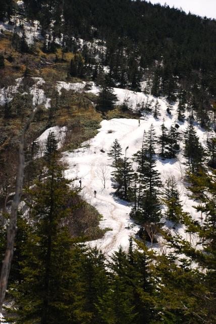 四阿山へ樹林帯の登り返し_残雪に先行者のトレース