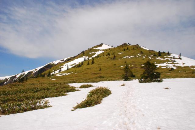 十ガ原から根子岳_残雪と笹の緑のパッチ