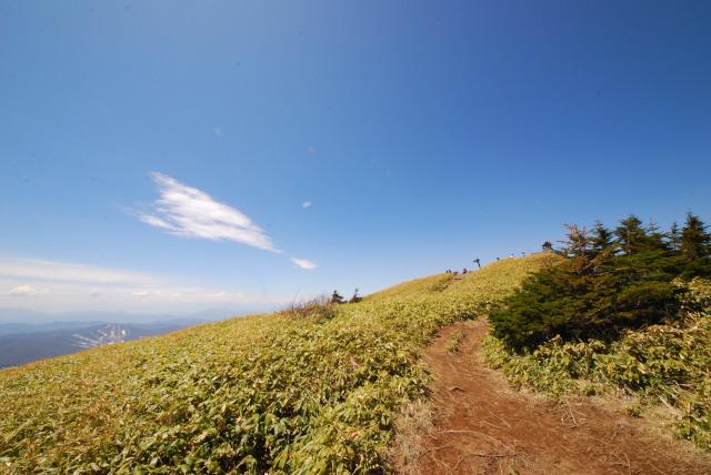 根子岳の山頂へ_広い笹原に青い空が気持ちいい