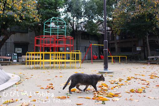 大阪の短い秋