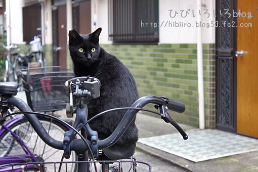 黒猫×タイル