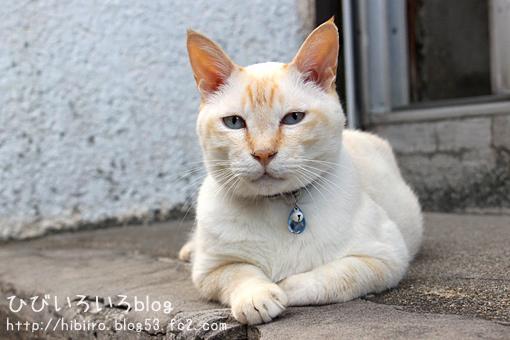 猫写2017(058)