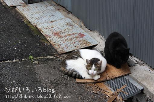 猫写2017(060)