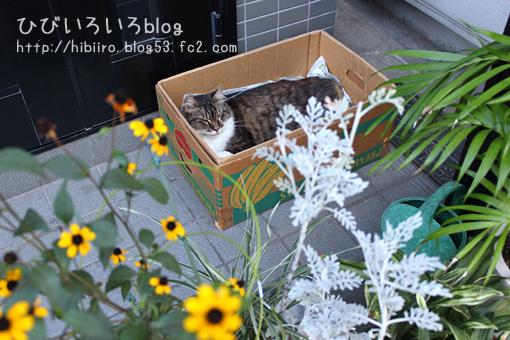 猫写2017(061)