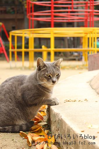 猫写2017(065)