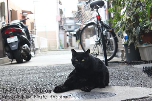 猫写2018(003)