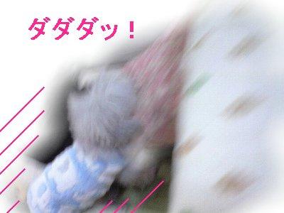 CA395720.jpg