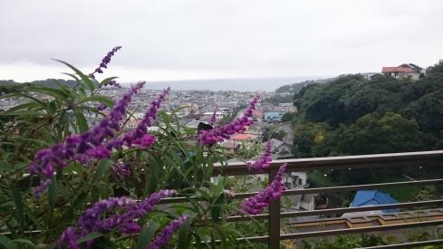 20171015秋の花