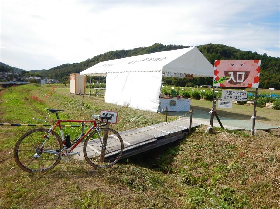 170930-094649-1自転車とダリア園_r