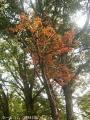 秋らしさ3
